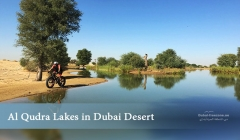 Article image: Al Qudra Lakes in Dubai Desert