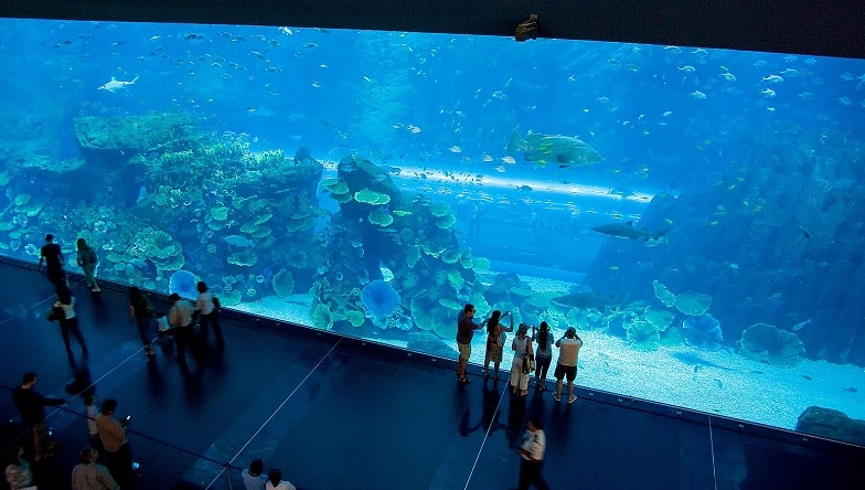 Main picture: Dubai Aquarium – a place which must be visited!