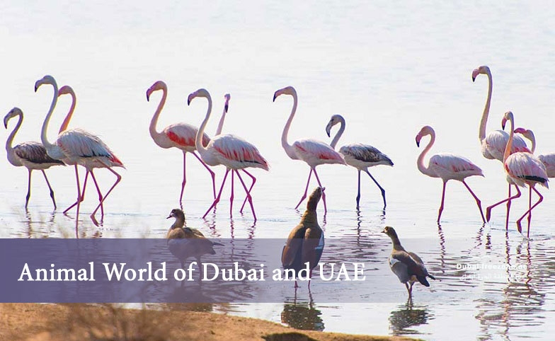 Main picture: Animal World of the UAE